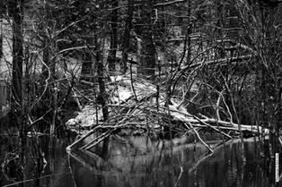 Beaver Pond Spring 2019 303.jpg