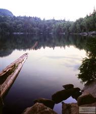 Lake_&_Tree_Aderoncks.jpg