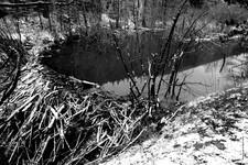 Beaver Pond Spring 2019 306.jpg