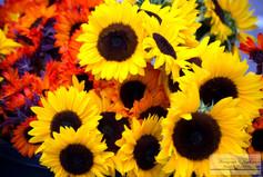 Sunflowers_1.jpg