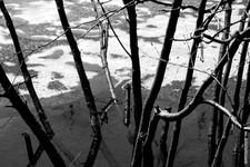 Spring  0174.jpg