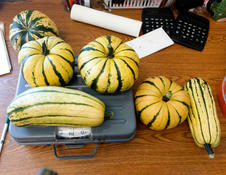 Squash at Our Center.jpg