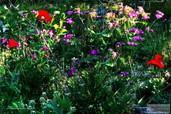 my_Garden_0813_2.jpg