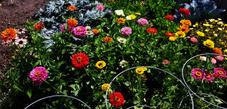 Amys Garden.jpg