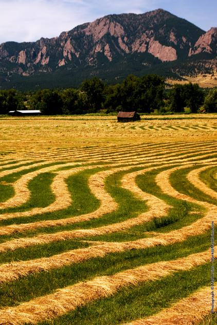 Grass in Field 7 2016.jpg