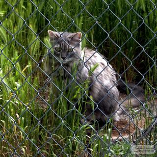 Fence_Cat.jpg