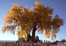 Tree_Fall_10_18_2012.jpg