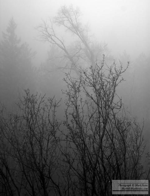 Trees_in_Fog.jpg