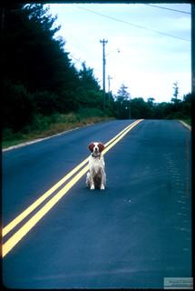 On_Road_Dog.jpg