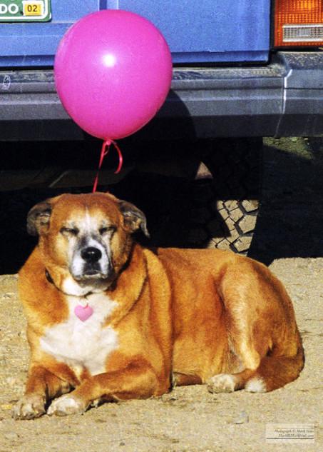 Molly_the_Dog_09.jpg