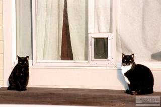 Sunny_Cats.jpg