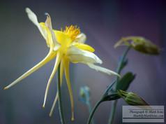 yellow_3740.jpg