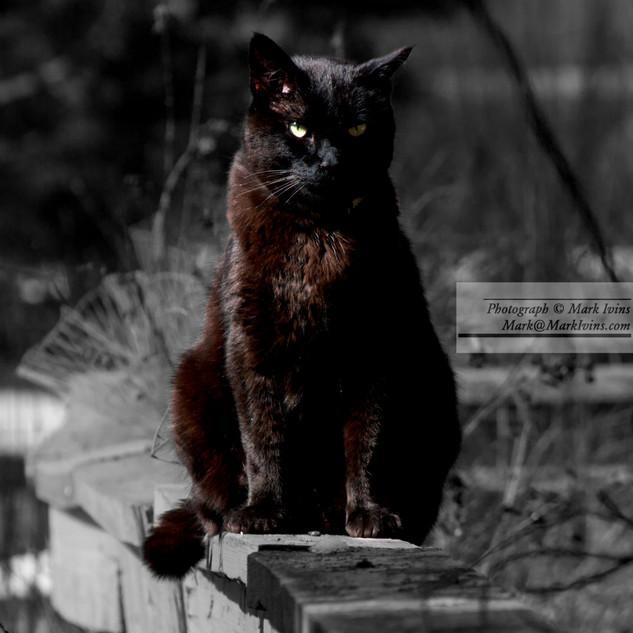 Black_Cat_2018_2.jpg