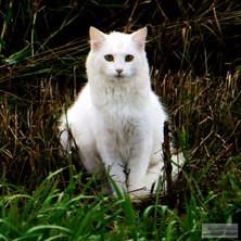 White_Kitty_9_2017.jpg