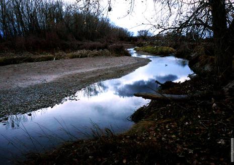 The River 1954.jpg