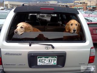 2_dogs_on_car.jpg