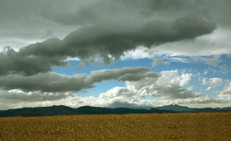 Corn field longmont 2013.jpg