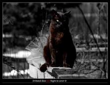 Cat Poster 22x17.jpg