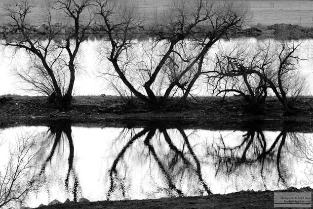 Ghost_Trees_6_2016.jpg