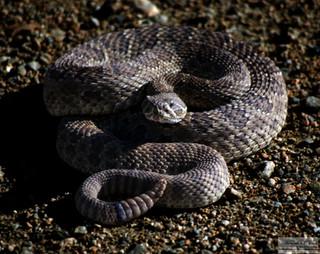 snake4351.jpg