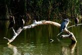 Birds on Log 2878 - Copy.jpg