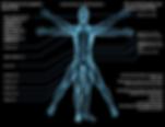 Endocannabinoid_System_copy_880x.png