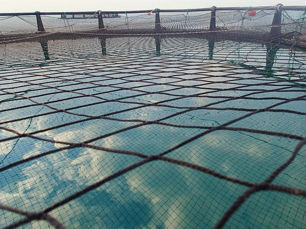 ASAKUA Fish Cage Nets