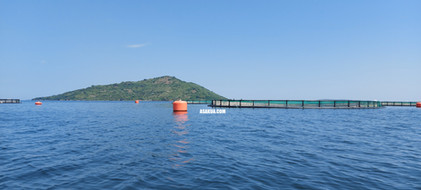 Fish Farming Cages