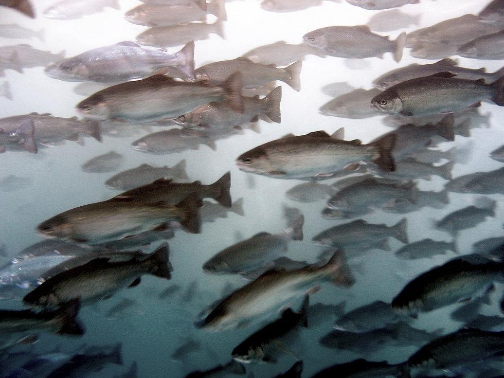 ASAKUA Aquaculture Equipments
