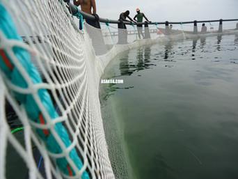 Fish Farming Cage Nets