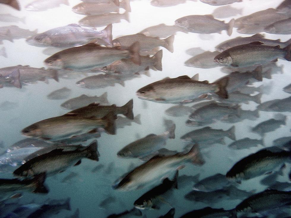 ASAKUA Fish Farming Equipment