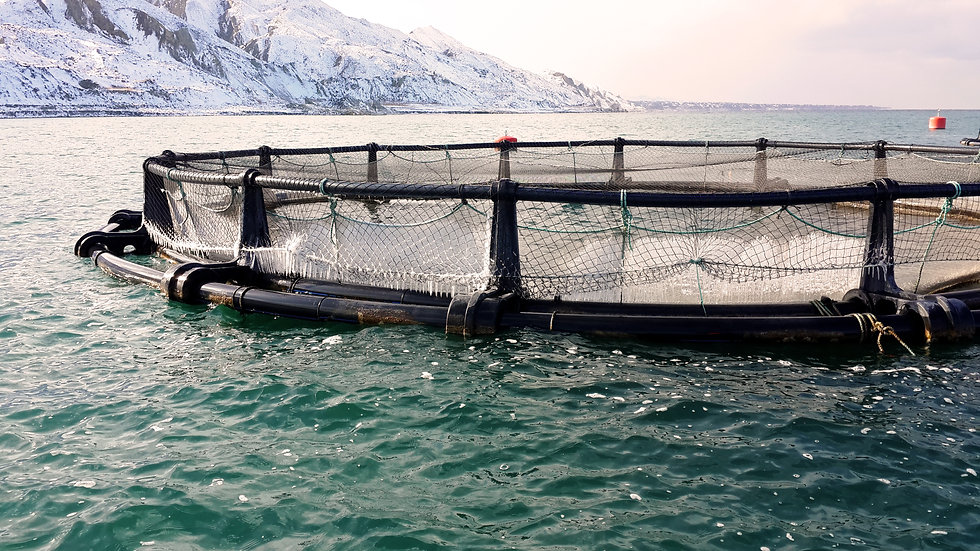 Fish Farm Nets