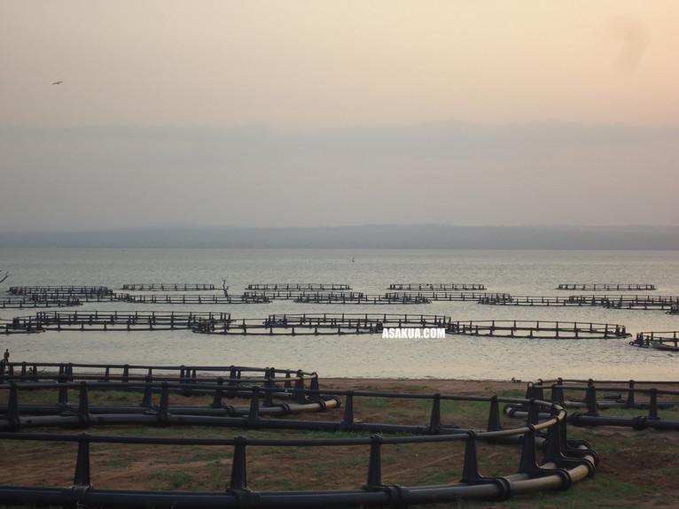 Fish Farmin Cages