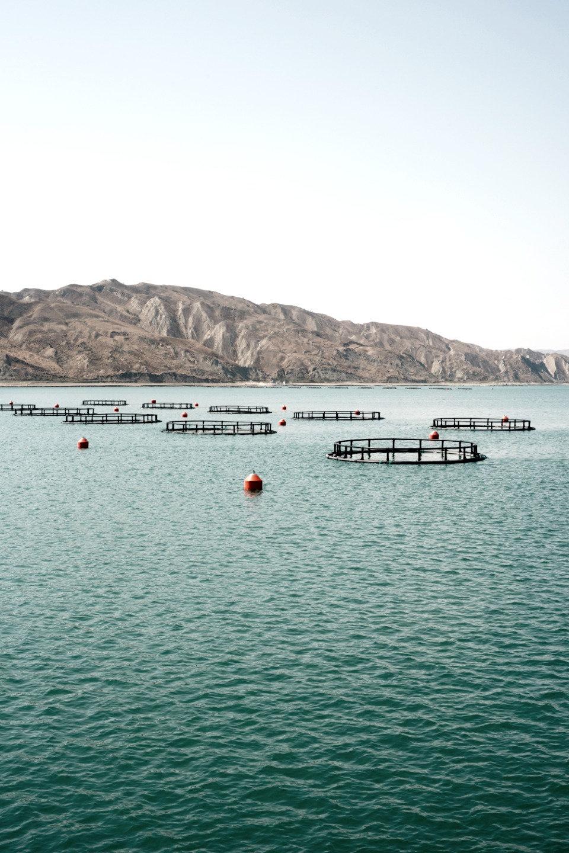 Fish Farm Project