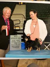 Another great day at Topeka dog show. Asia Fairy S Lipetskih aka Birdie, won Winners Bitch, Best of