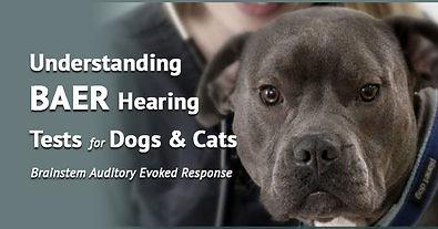baer-hearing-social-shared.jpg