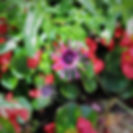 Flowers at the James Bay Inn Hotel.jpg