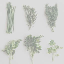 herbs for cold and flu (2).png