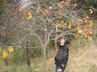 Eating With The Seasons: Early Winter Persimmons