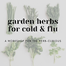 herbs for cold and flu (1).png