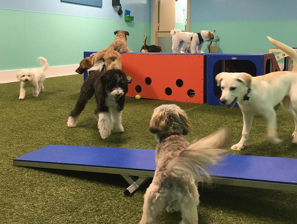 Doggie Daycare, Day Stay Room