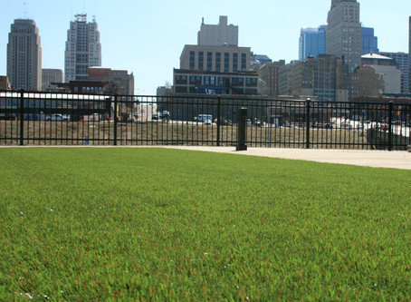 ForeverLawn Fusion: The Answer to Reflective Heat Concerns