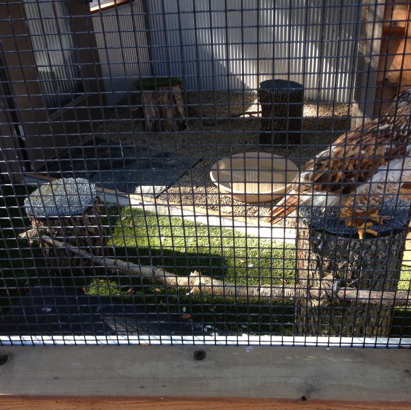 Raptor Ridge Bellevue, NE