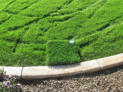 Compare artificial grass with natural grass