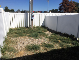 Why Choose K9Grass for Dog Facilities