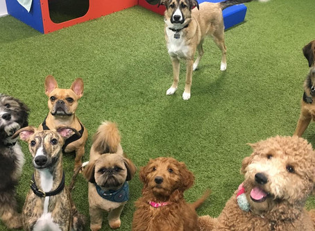 Stylin Paws Salon & Day Stay for your Dog!