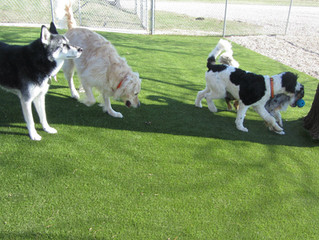 Spotlight: Dog Boarding Facilities