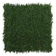 Playground Grass Discovery
