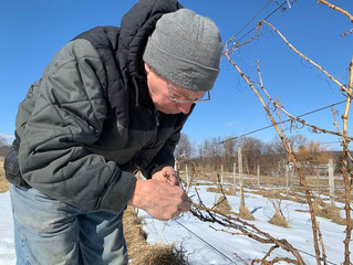 In Finger Lakes vineyards, climate change has already arrived