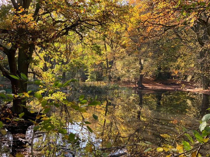 Sandy Heath Pond, Hampstead Heath